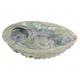 Coquillage Abalone pour smudge encens - avec ou sans support