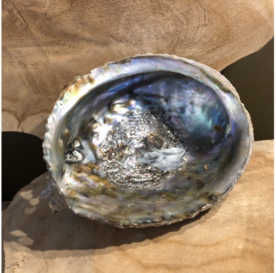 Coquillage Abalone sans support pour smudge encens