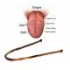 Grattoir - Racloir à langue en cuivre
